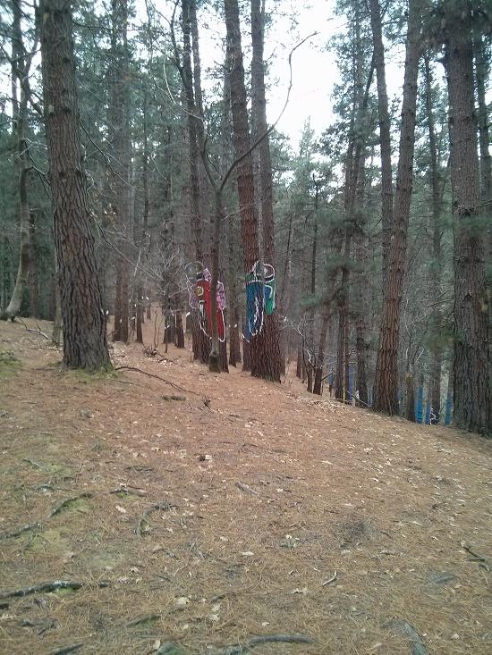bosque-pintado-motos